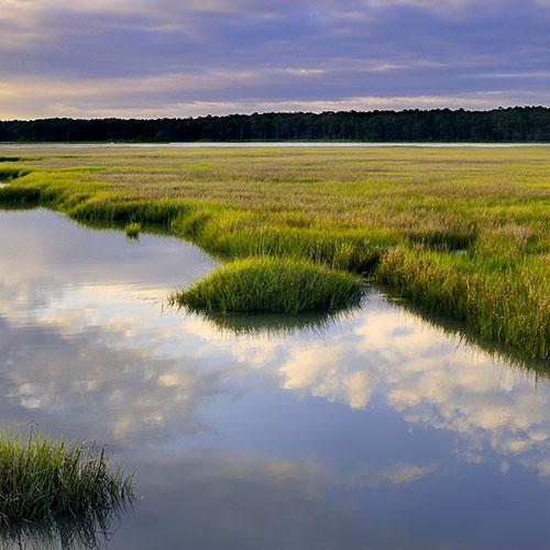 Chesapeake Bay saltwater marsh