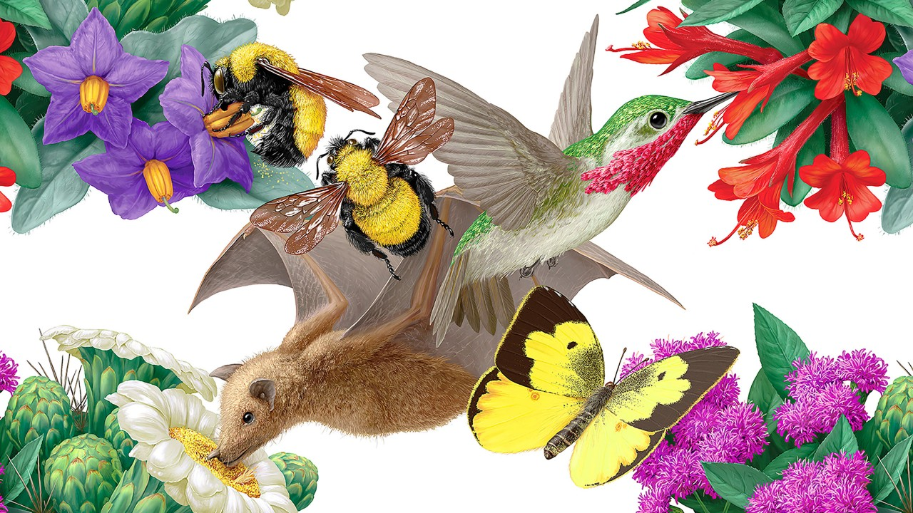 Illustration of birds and bees