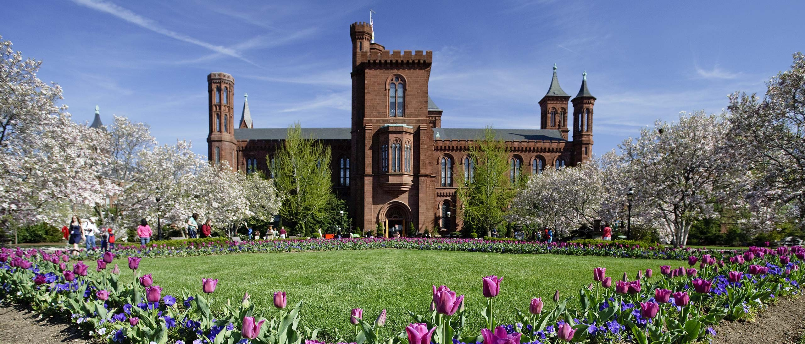 Purple tulips and blue pansies planted in a diamond pattern in the lawn and pink-blooming magnolia trees with red-stone Smithsonian Castle behind