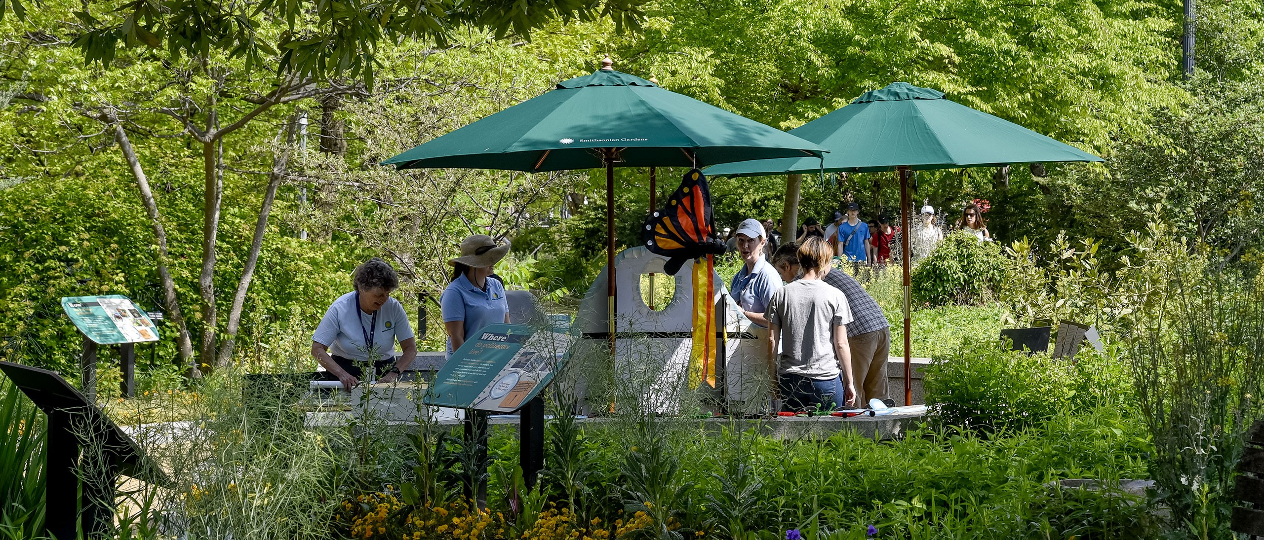 Staff setting up green shade umbrellas, large windsock bugs and other supplies in Pollinator Garden