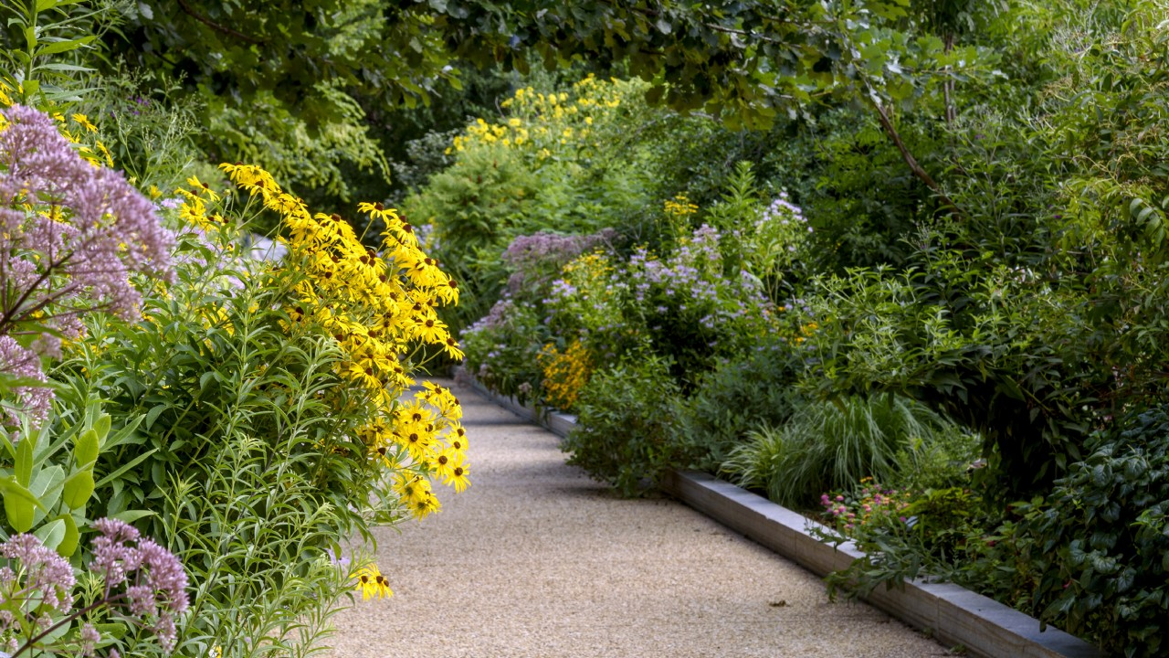 Path through Pollinator Garden framed by purple and yellow flowers