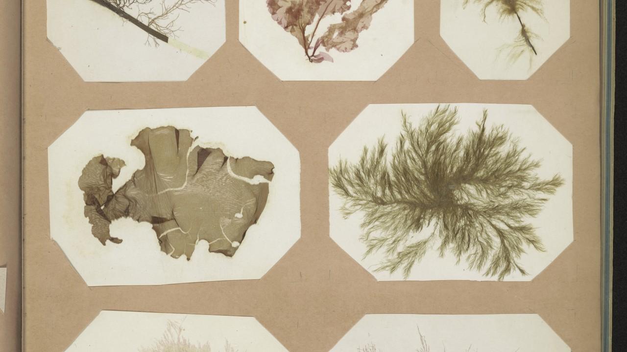 Seaweed scrapbook