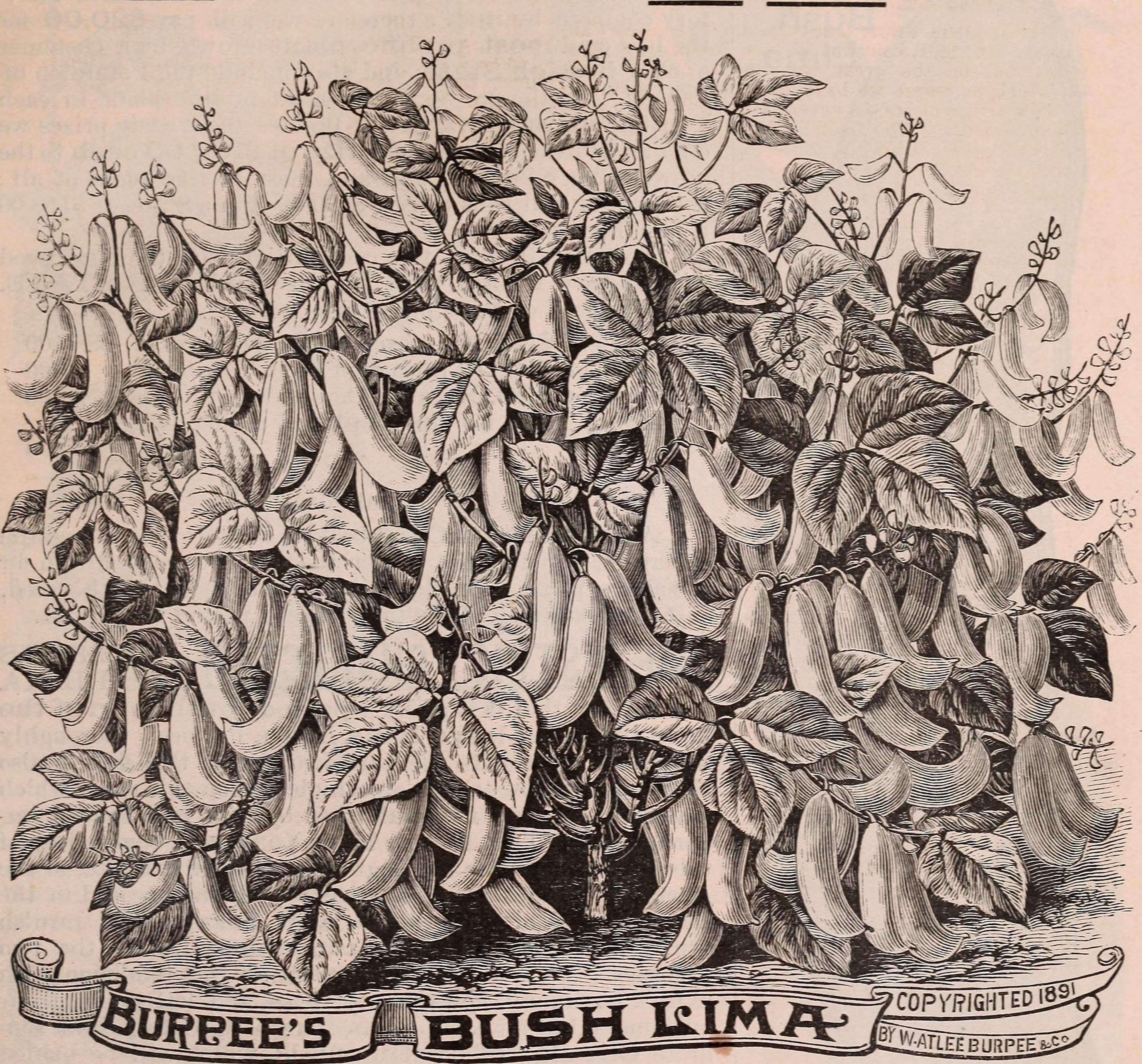 1878 Burpee Seed Company