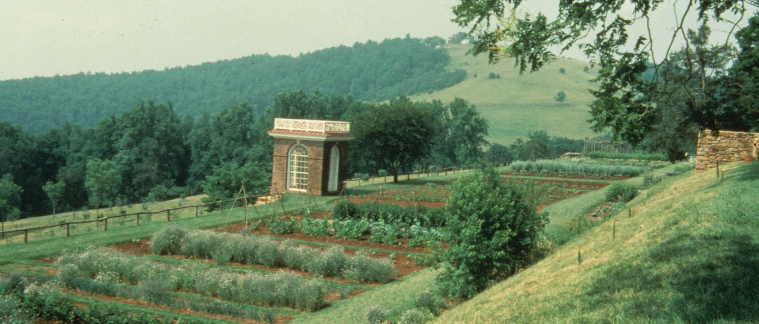 Color photograph of vegetable garden at Monticello.