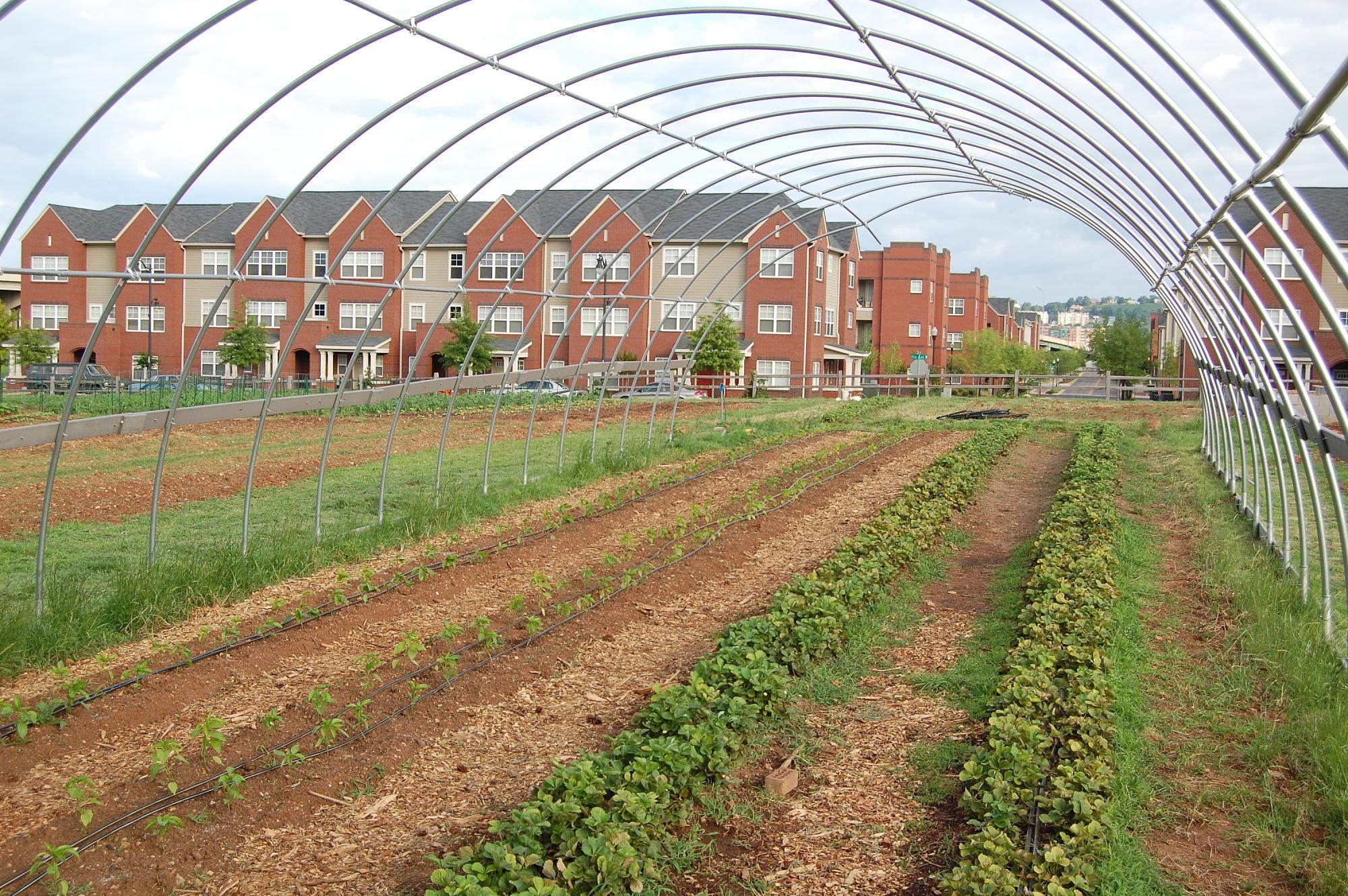2000s Resurgence of Community Gardens