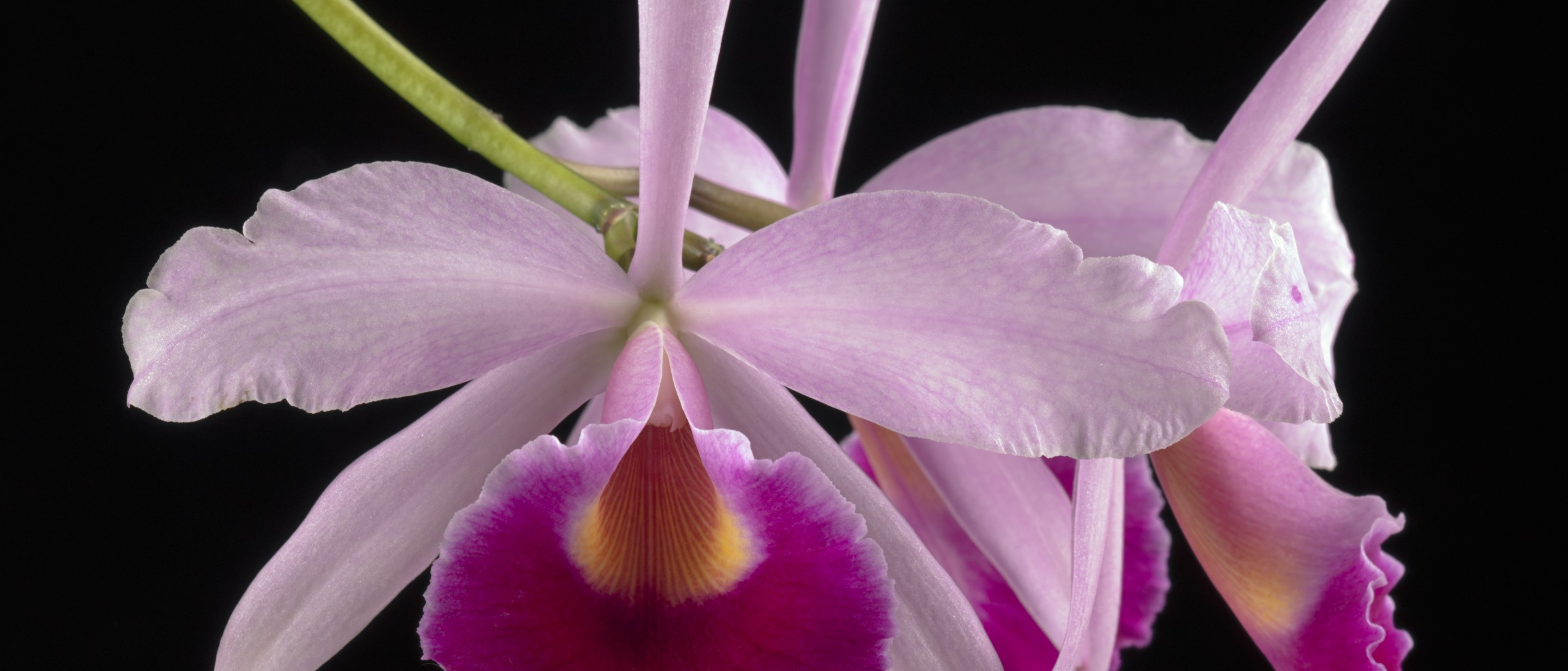 Orchid Page Banner