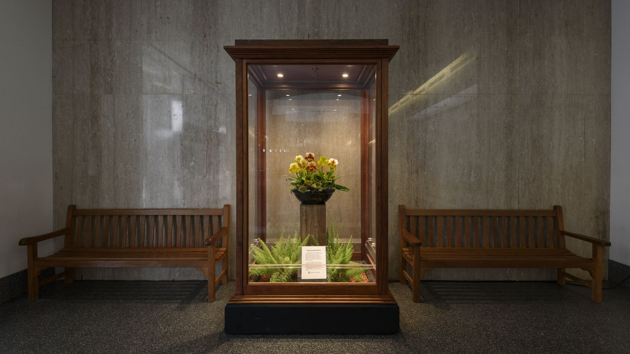 Horticulture Displays, Orchid Case at the National Museum of American History