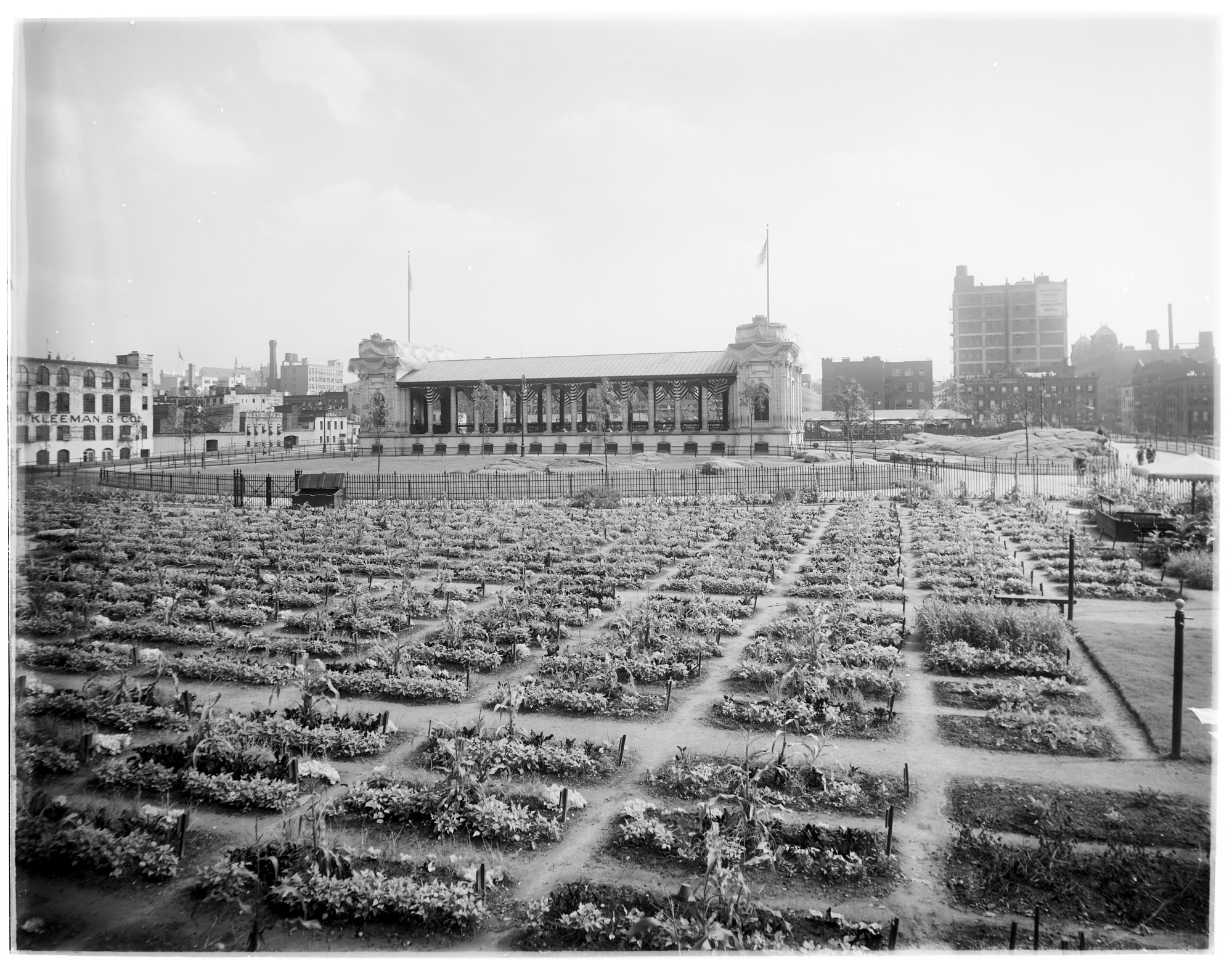 Black and white landscape of garden plots. Buildings on the horizon.