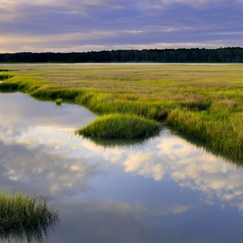 Chesapeake Bay saltwater marsh