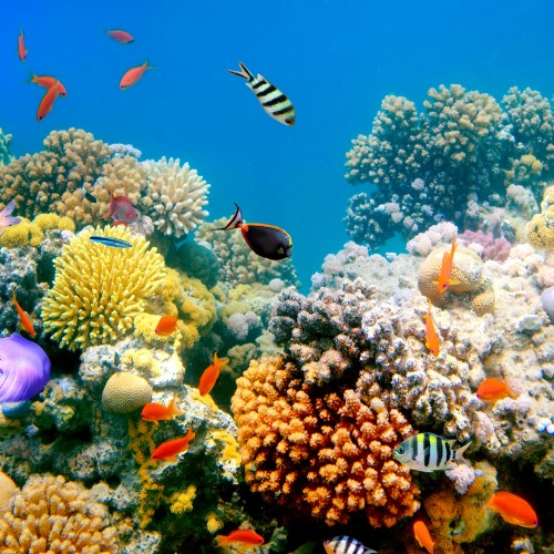 Fish swiming around a coral reef