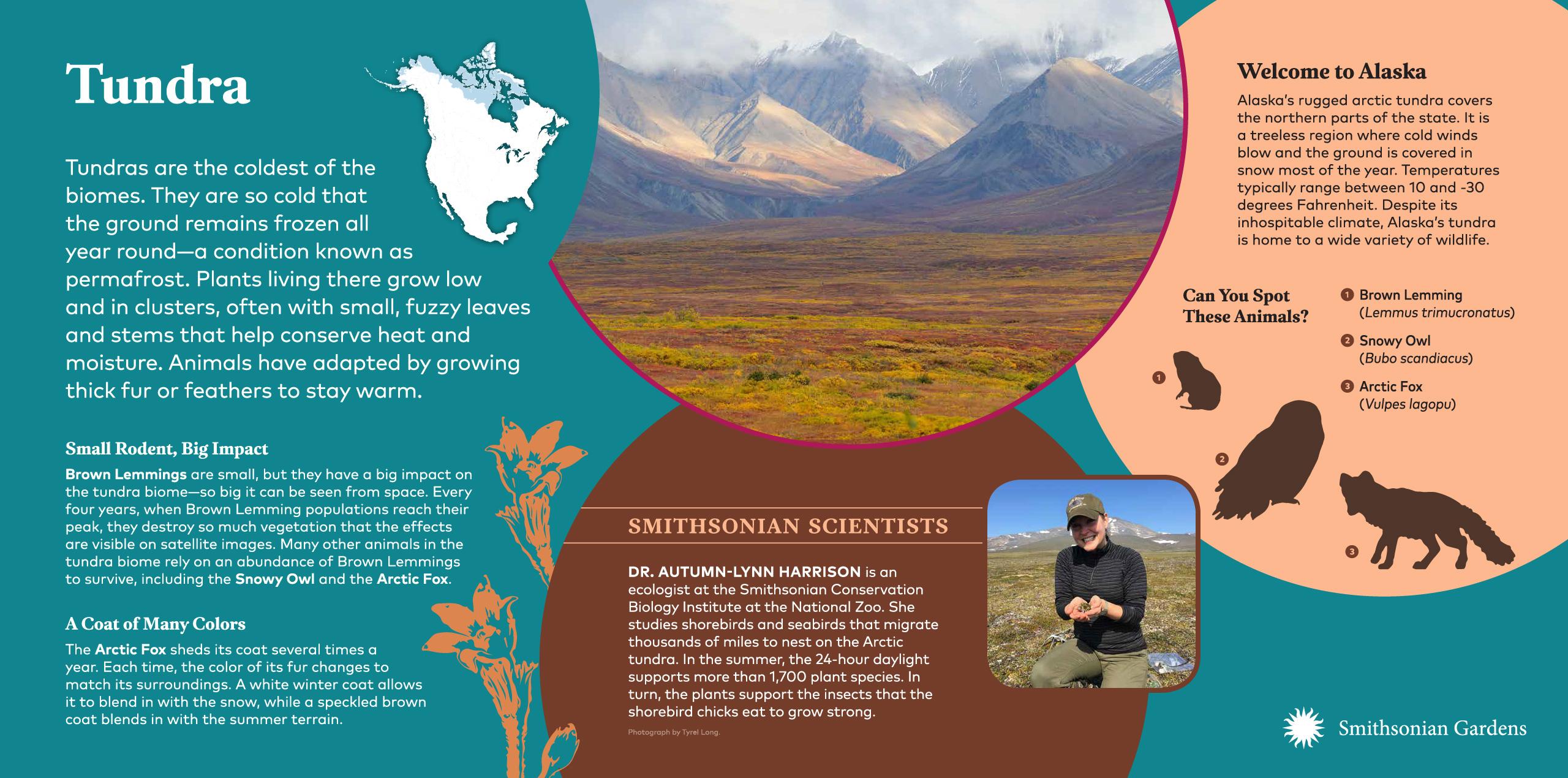 Tundra Biome exhibit panel