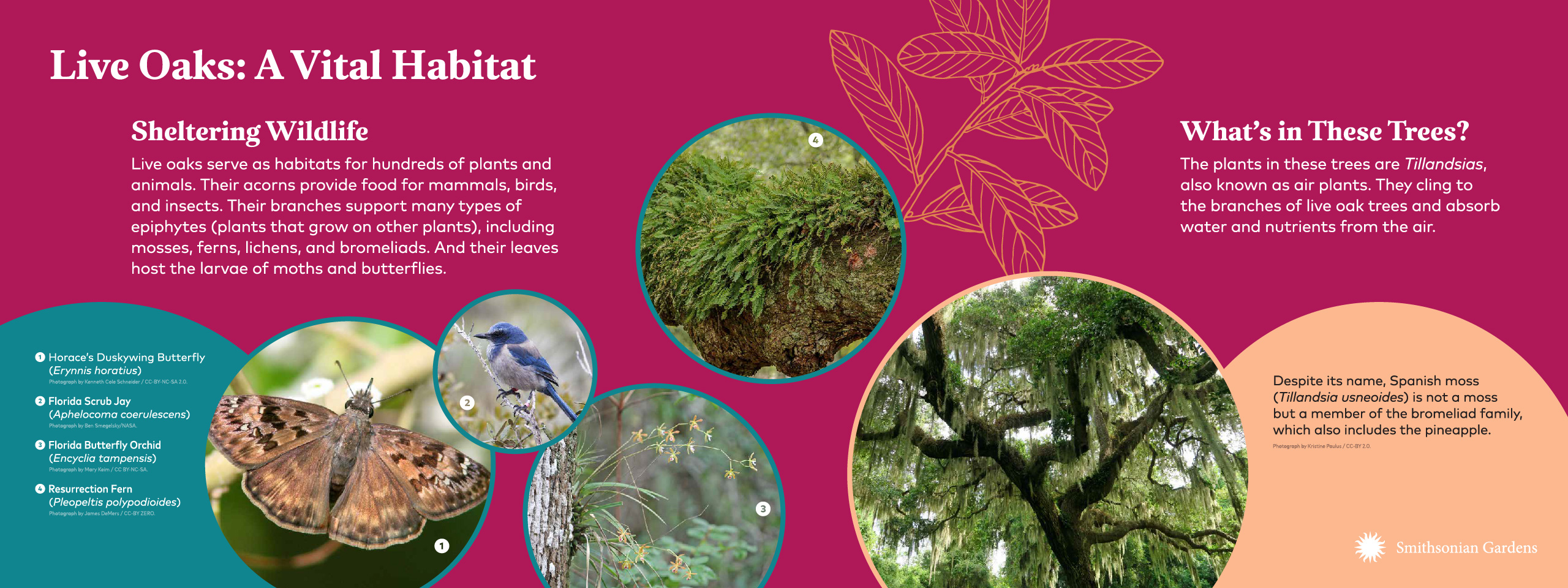 Live Oaks: A Vital Habitat exhibit panel
