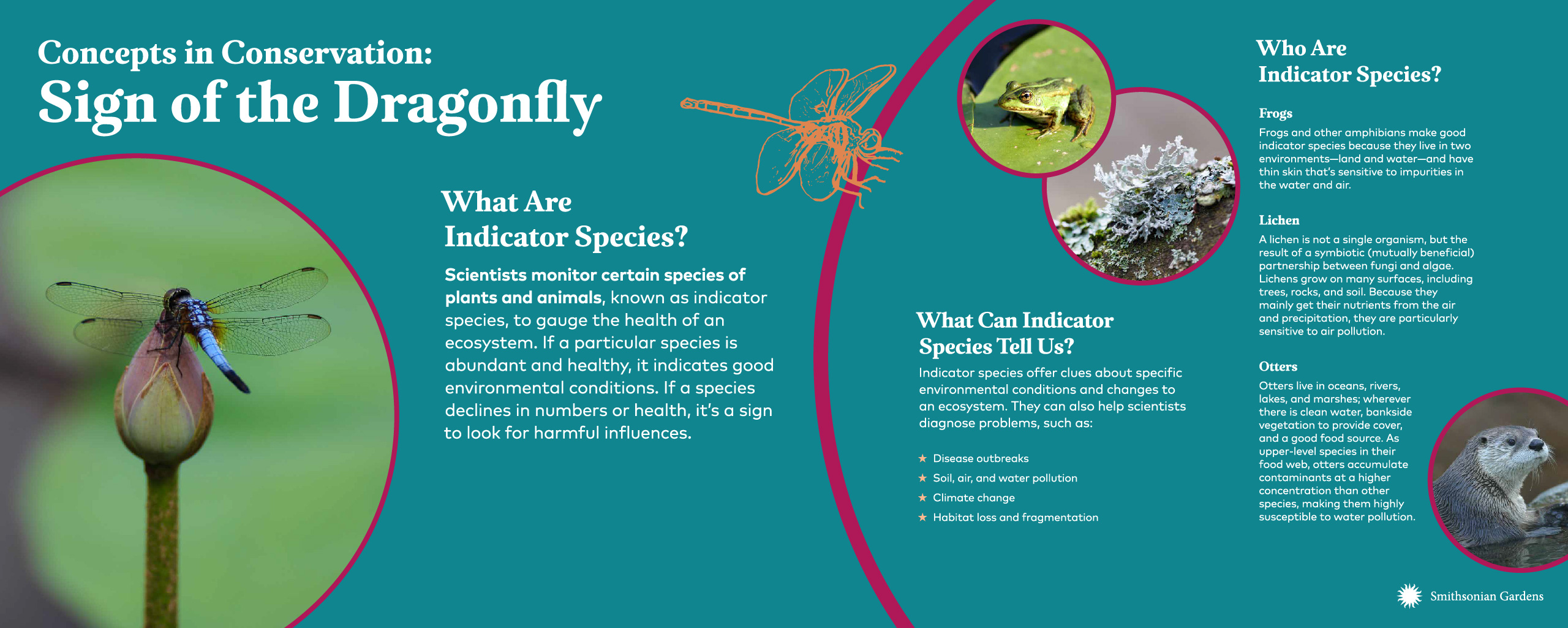 Concepts in Conservation: Sign of the Dragonfly exhibit panel