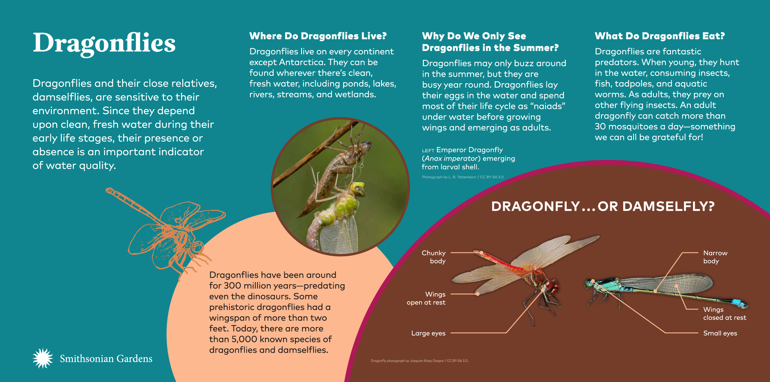 Dragonflies exhibit panel