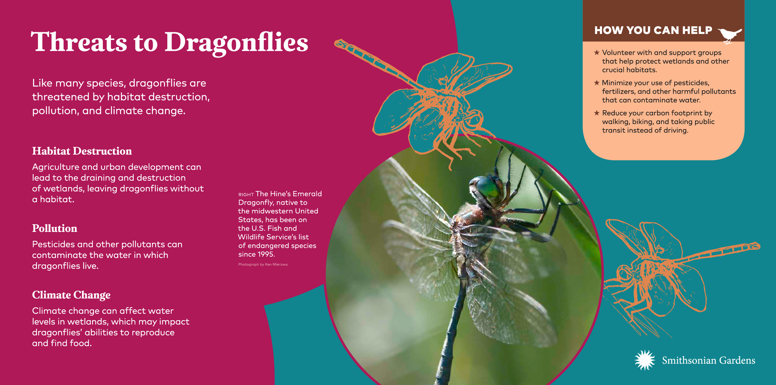 Threats to Dragonflies exhibit panel