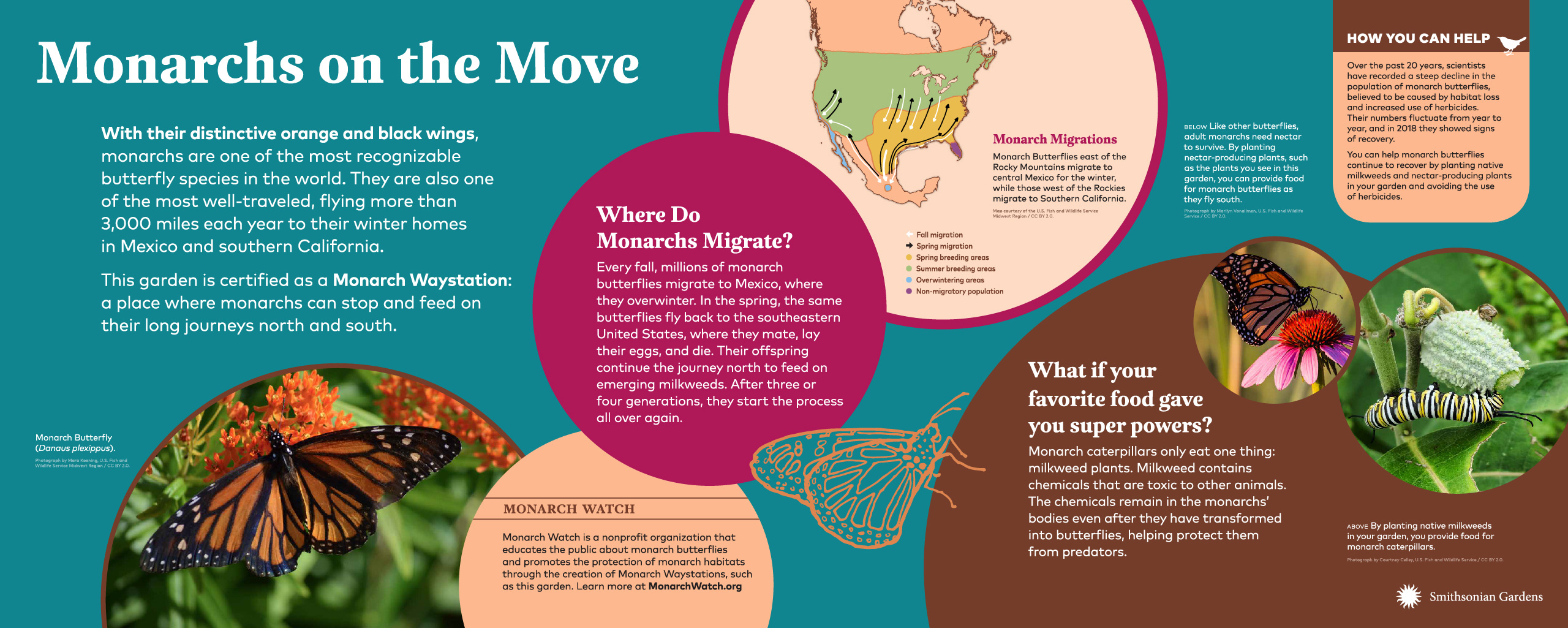 Monarchs on the Move exhibit panel