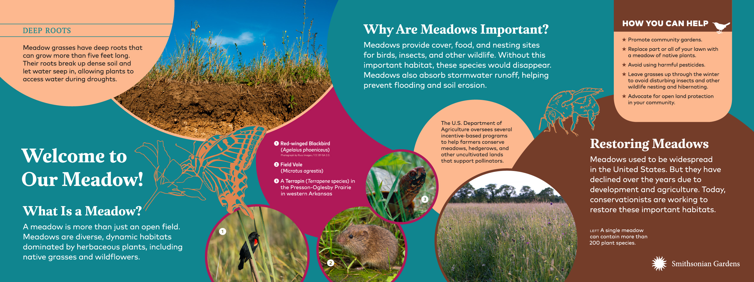 Welcome to Our Meadow! exhibit panel