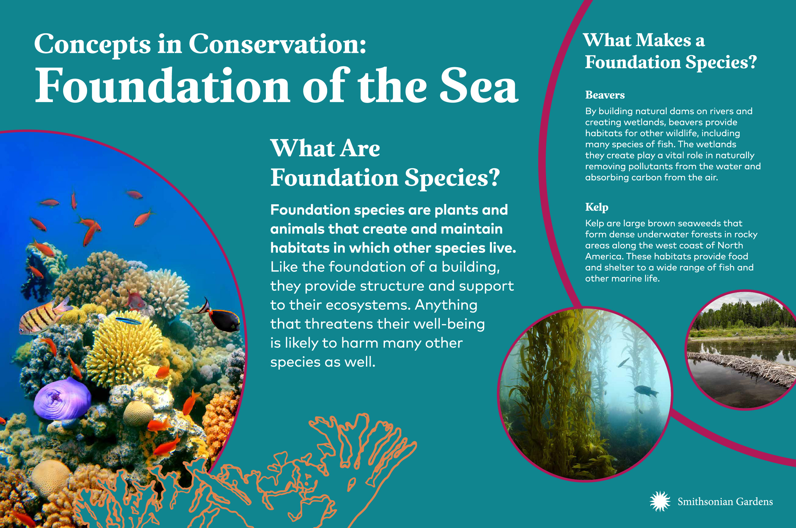 Concepts in Conservation: Foundation of the Sea exhibit panel