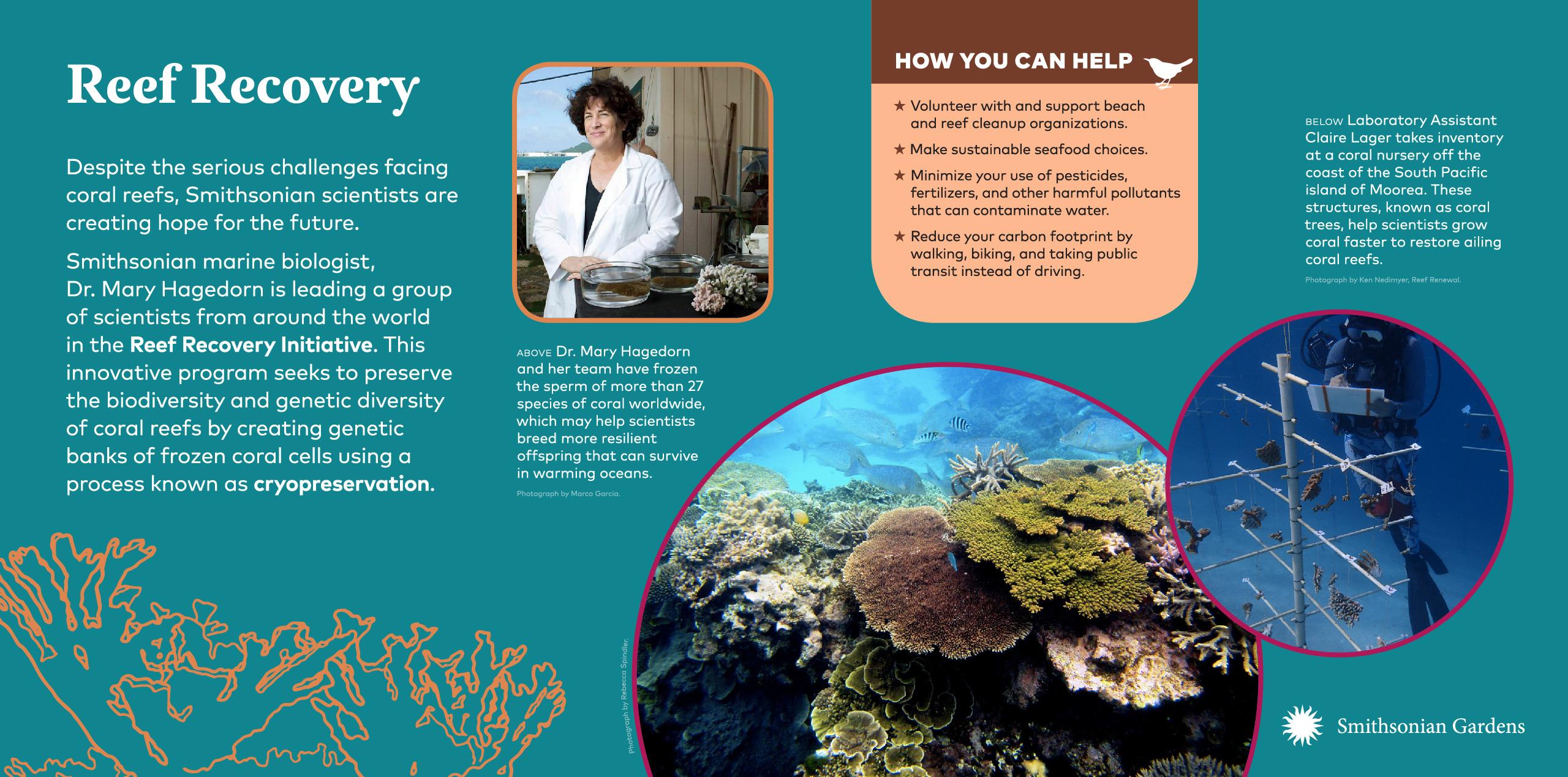 Reef Recovery exhibit panel