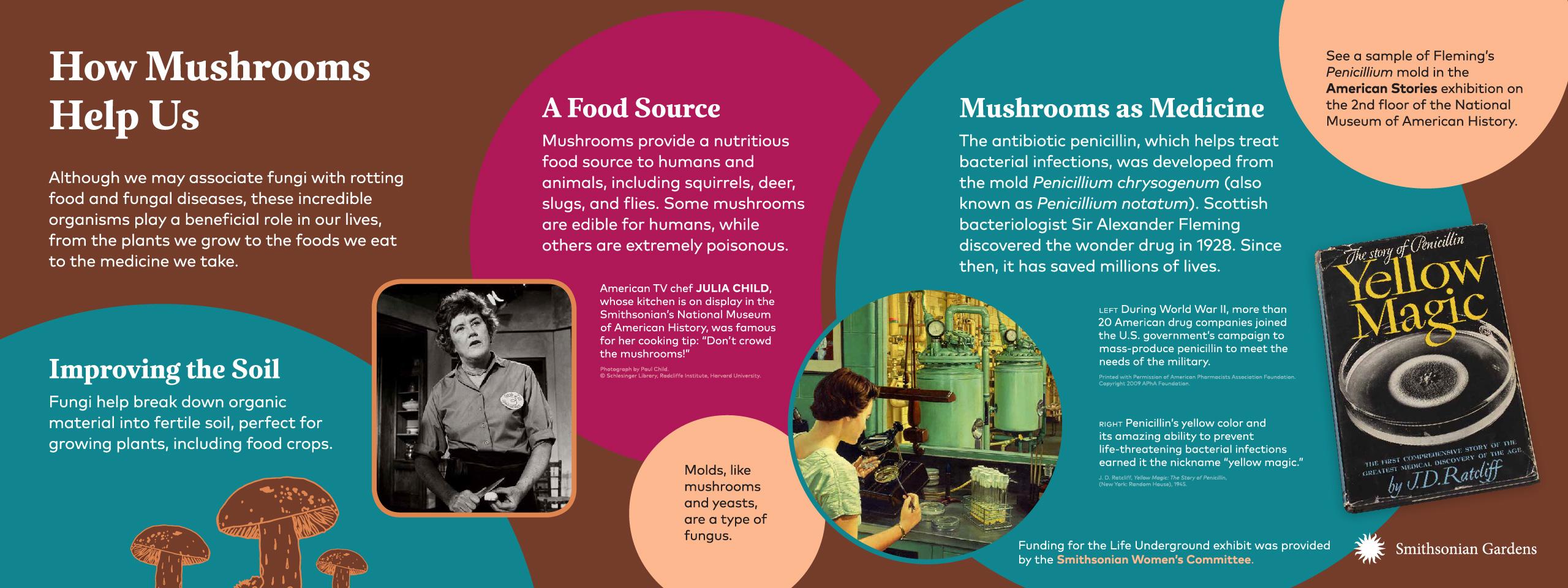 How Mushrooms Help Us exhibit panel