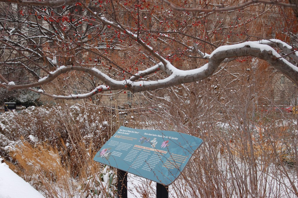 Garden sign and tree with red berries covered in snow