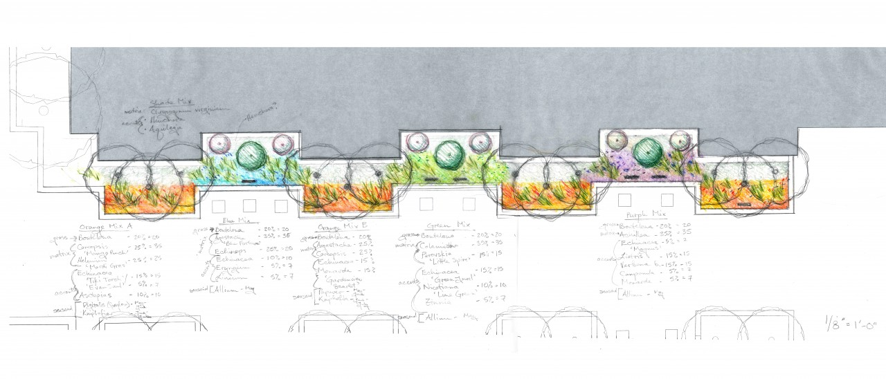 architectual sketch of common ground planting beds