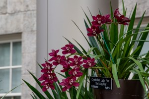 orchid on exhibition with descriptive display label