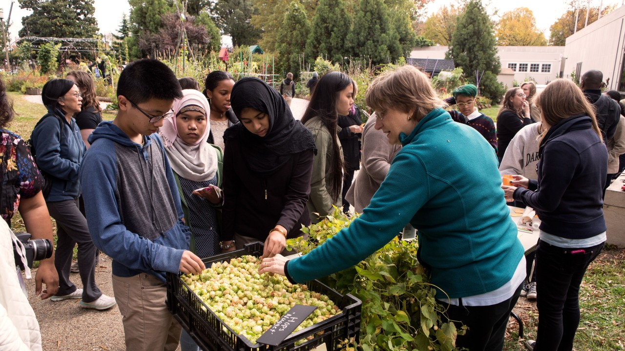 Visitors examine harvested hops in the Victory Garden