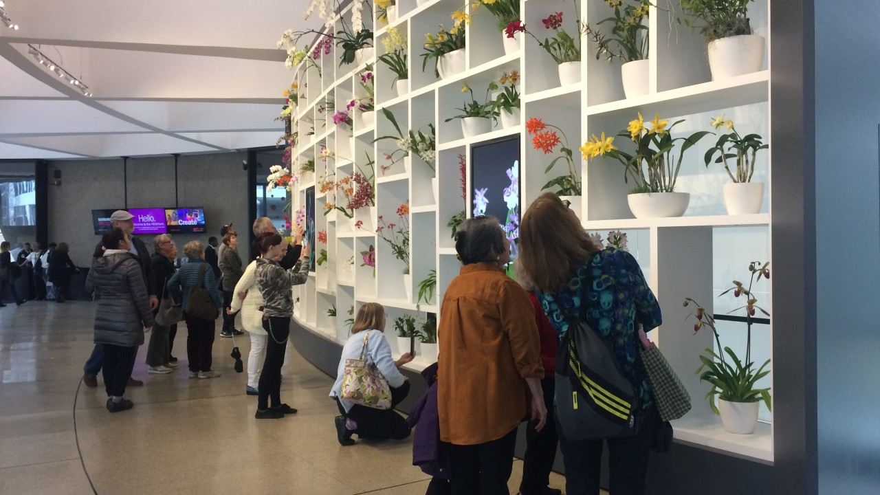 Museum visitors standing in front of wall of white shelves in the Hirshhorn Museum lobby featuring yellow, purple, white, red and orange orchids in white pots.