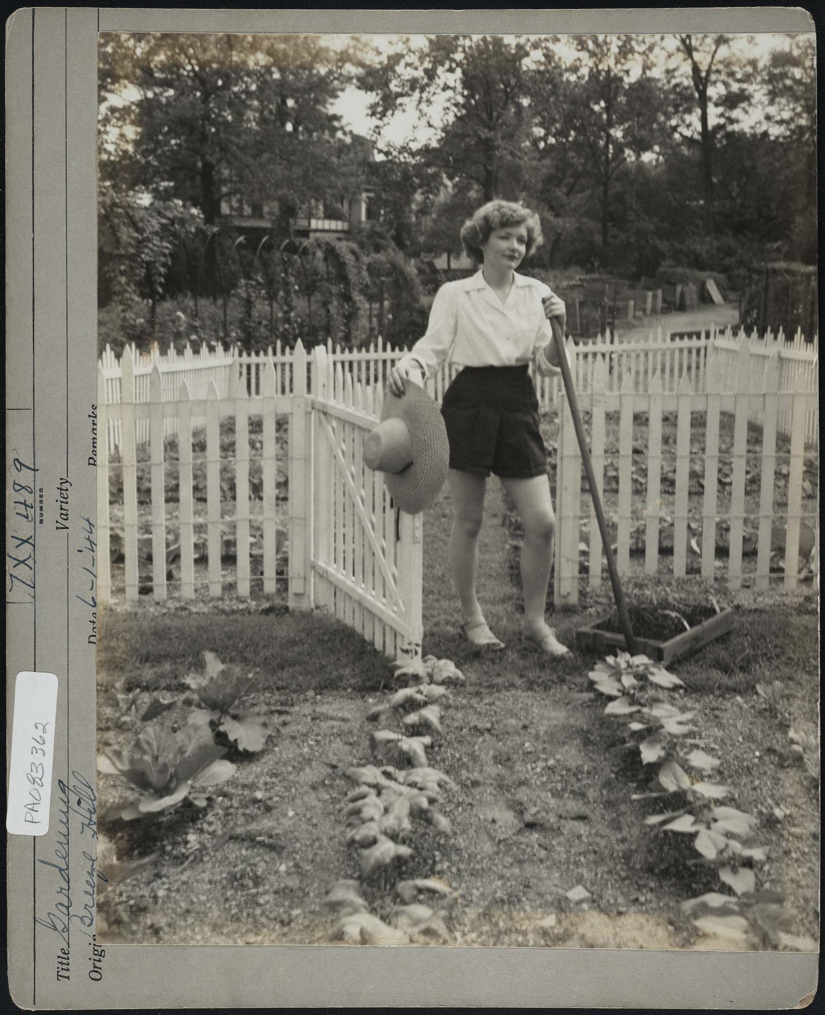 Black and white photo of a woman holding a garden rake while opening gate in white picket fence surrounding a vegetable garden