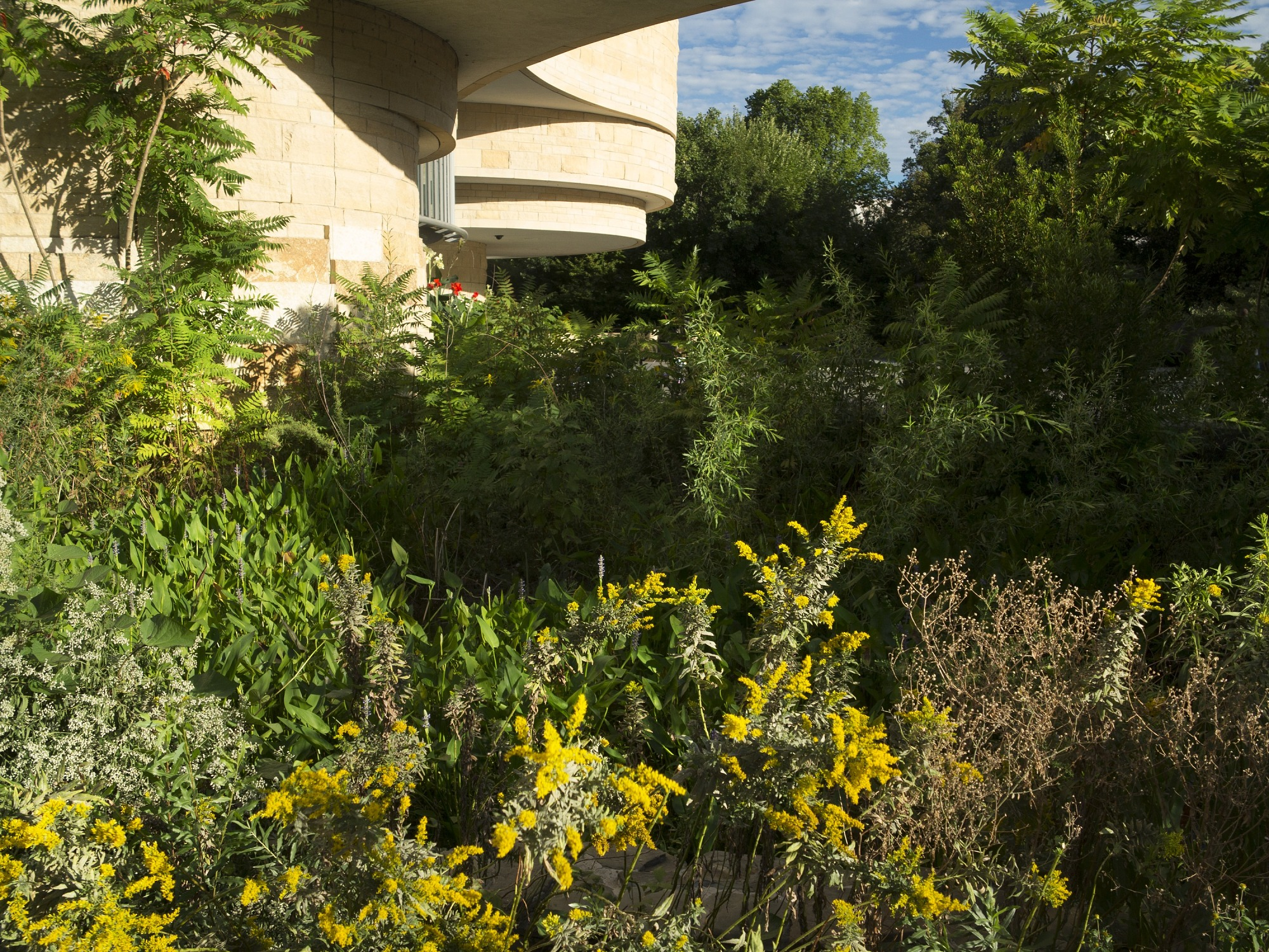 Goldenrod and milkweed in front of museum building
