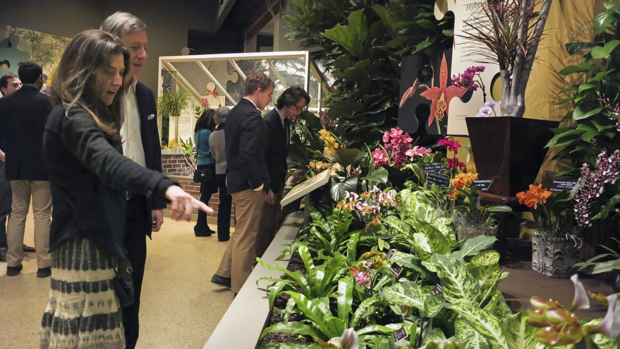 Visitors look at orchid planting
