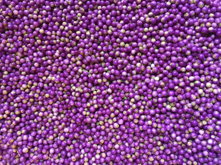 hundreds of freshly-picked purple beautyberries