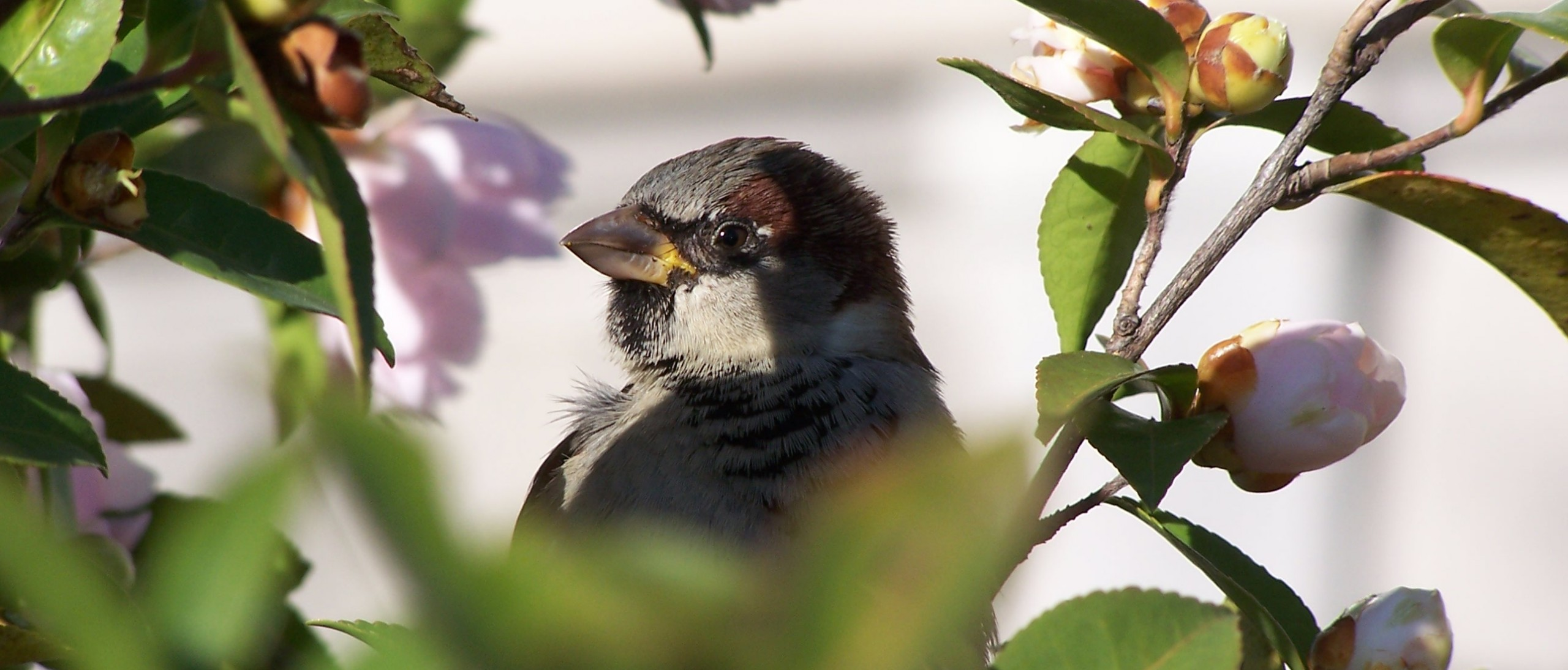Bird in Shrub
