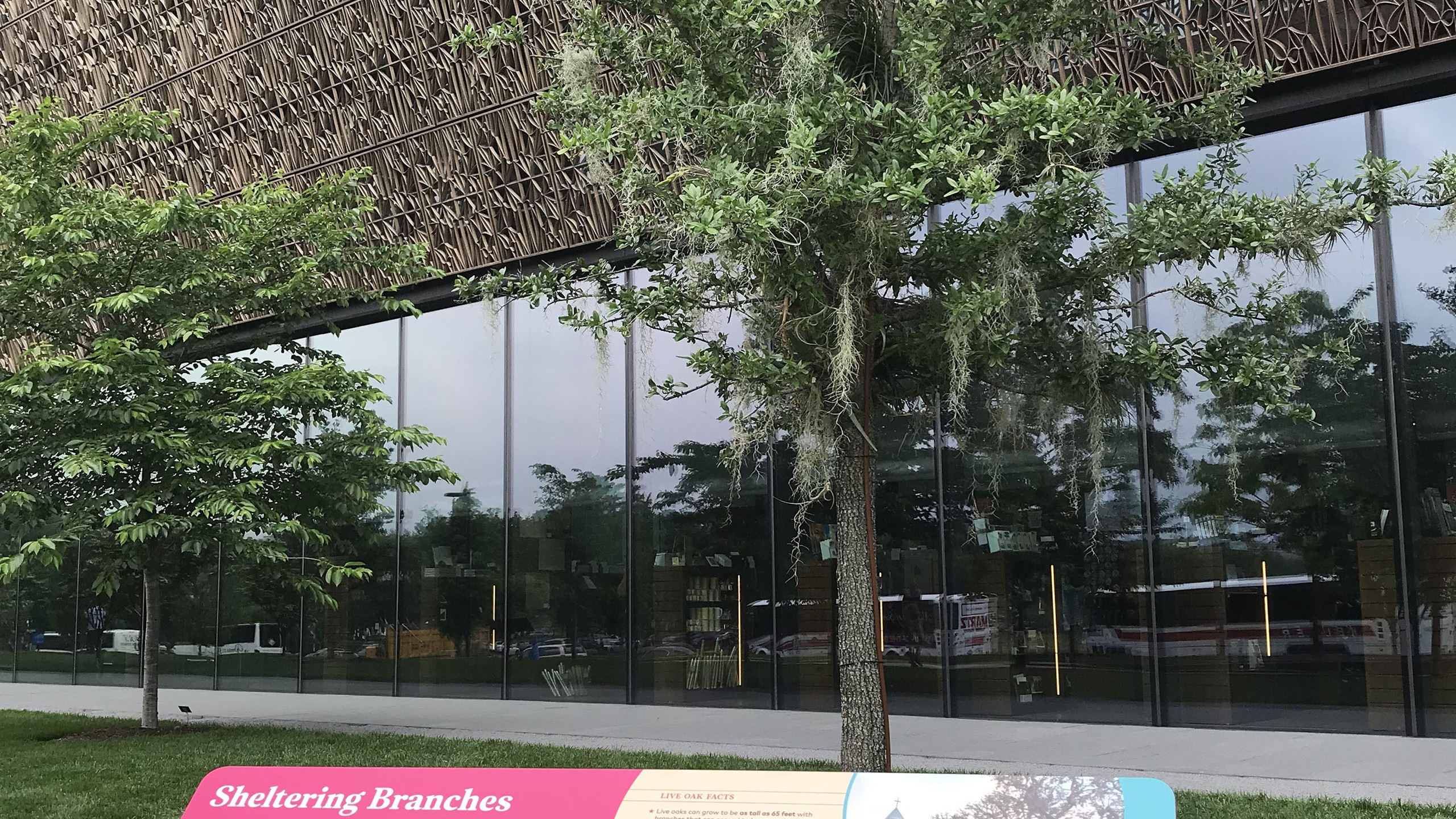 Sheltering Branches outside of the National Museum of African American History and Culture