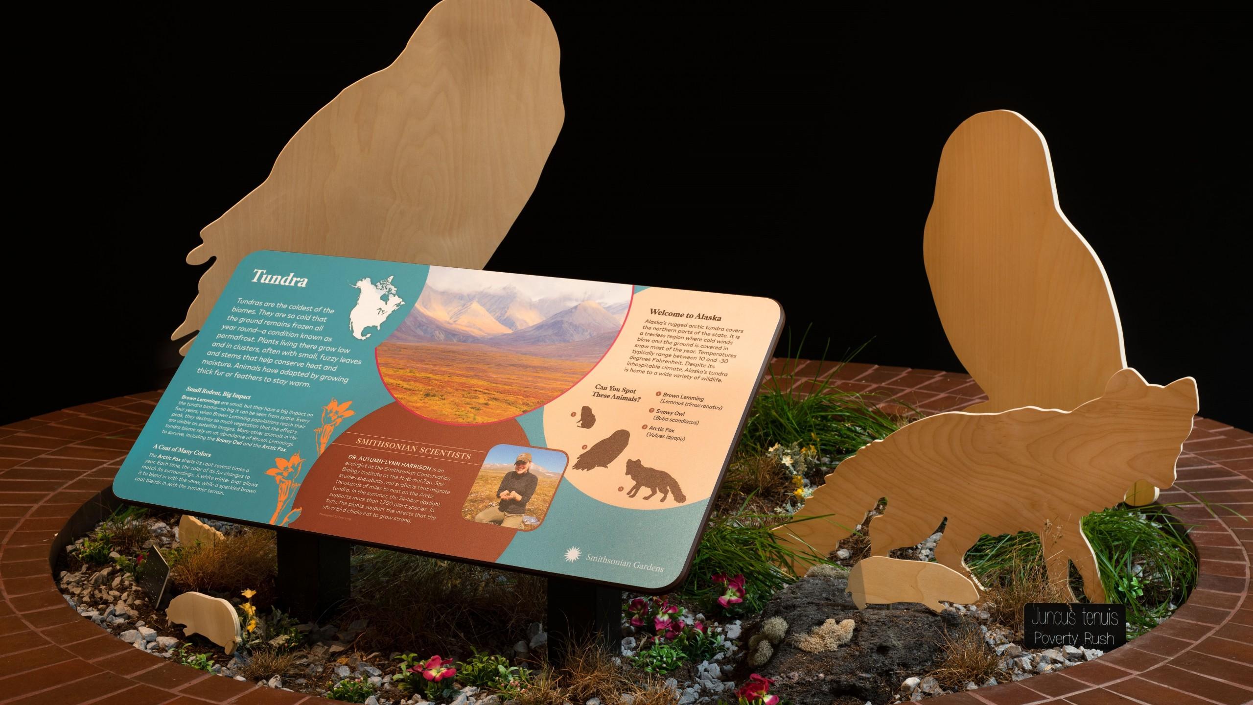 Biomes: Life in Balance inside the S. Dillon Ripley Center, Habitat Exhibition. Carolyn Thome, photographer.