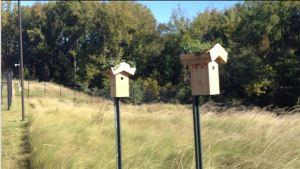 Bluebird House (nesting boxes) with Green Roof
