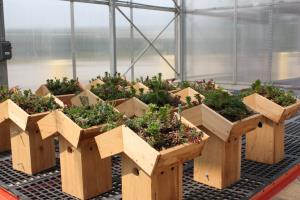 Green roof nesting boxes waiting to be installed at the Smithsonian Gardens greenhouses in Suitland, Maryland earlier this winter