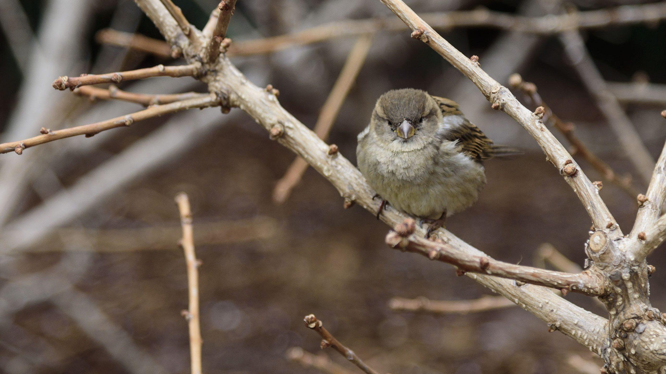 Urban Bird Habitat Garden at the National Museum of Natural History
