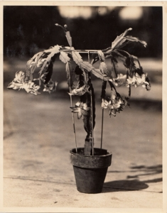 Grandpa Alost developed a way to graft these cactus for commercial propagation & hand made these metal stands, Alost Book by Mama