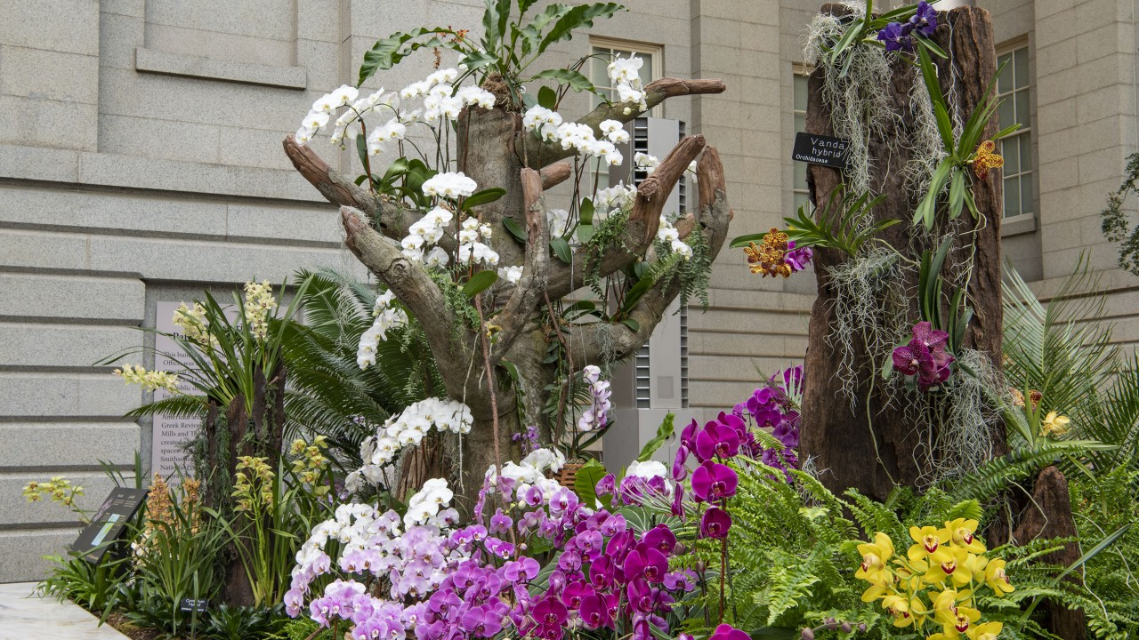 Orchids: Amazing Adaptations at the Robert and Arlene Kogod Courtyard