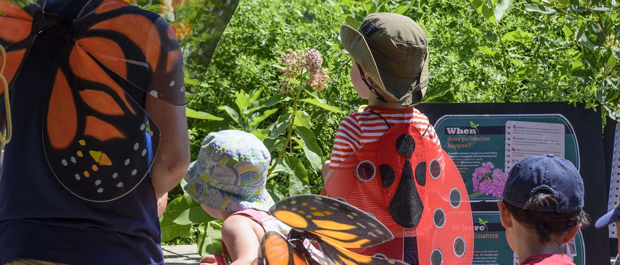 Pollinator Garden at the National Museum of Natural History