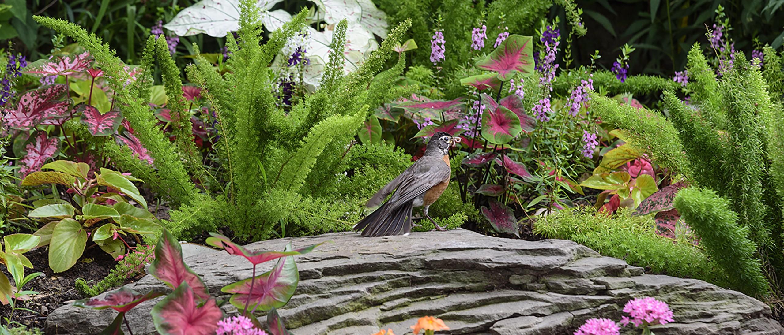 Bird in Pollinator Garden