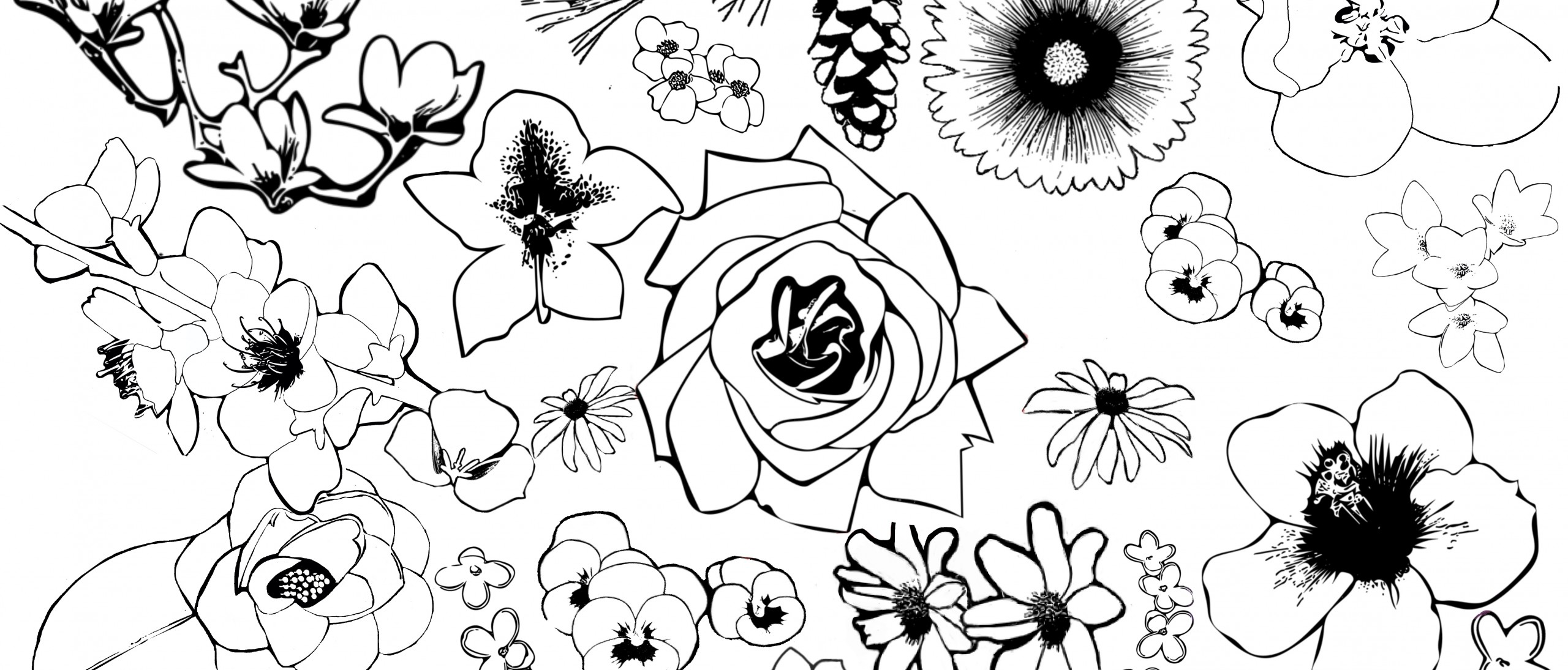 Coloring Pages for State Flowers