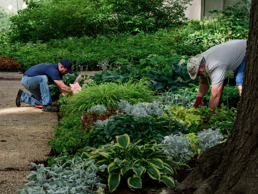 Staff working in the Woodland Garden at the National Museum of American History
