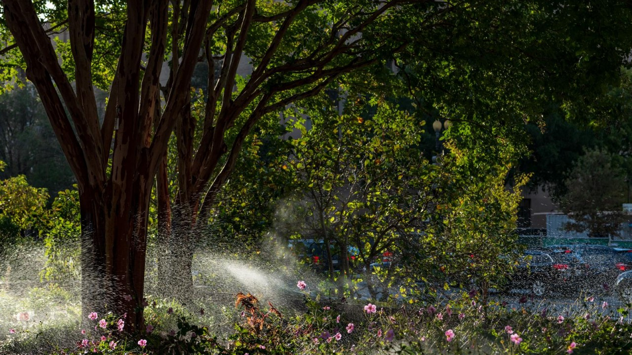 Tree Collection and sprinklers