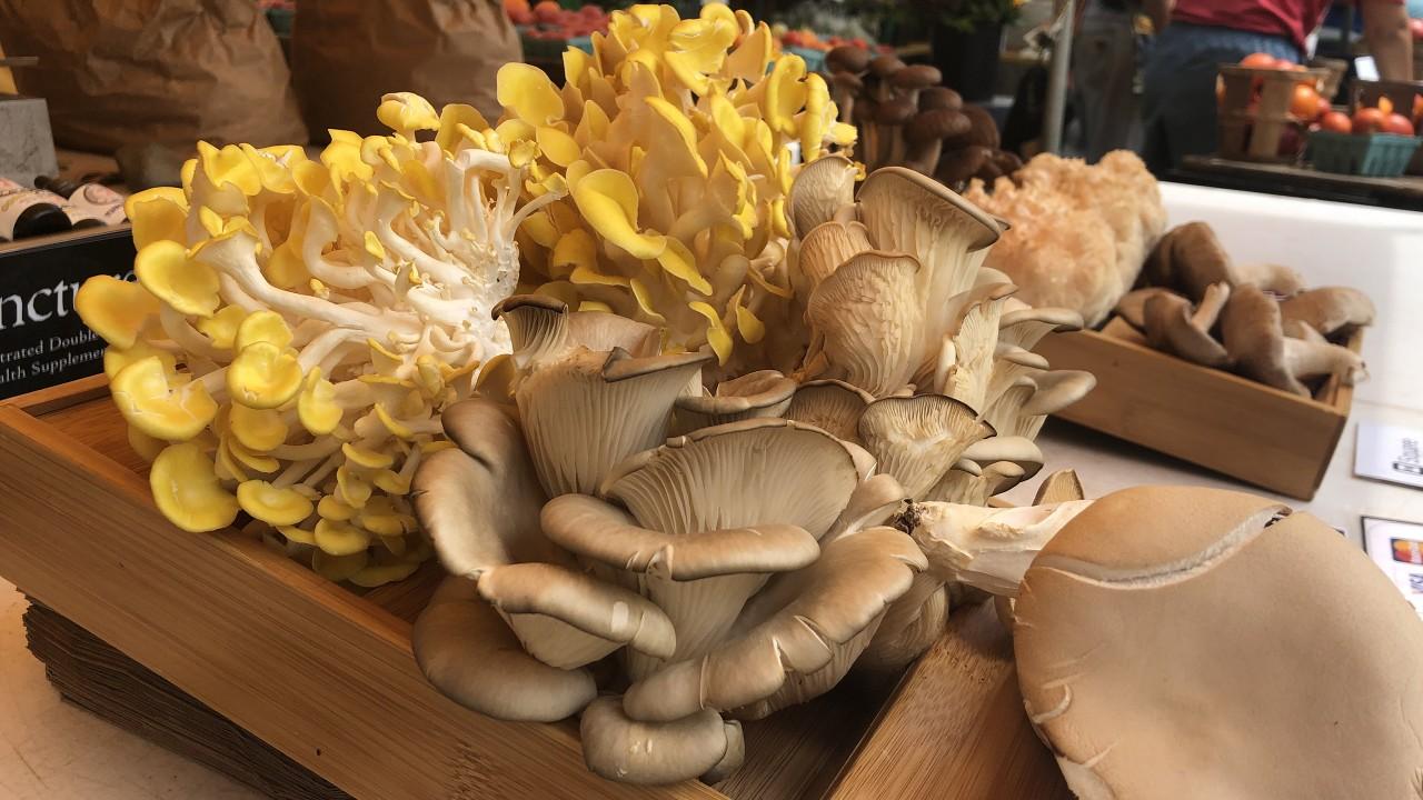 Assortment of mushrooms