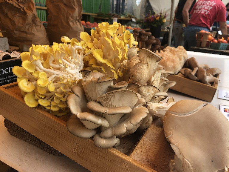 Assortment of mushrooms