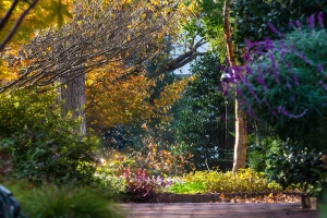 Mary Livingston Ripley Garden in the fall