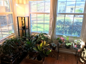 Houseplants near windows